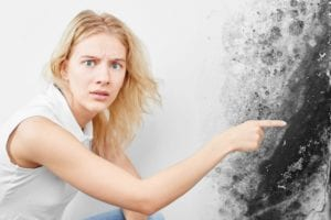 How Dangerous Is Black Mold? - There are 8 myths about black mold that many people believe. This article is about black mold removal and explains what it is, why it grows, and the sicknesses caused by exposure to it.