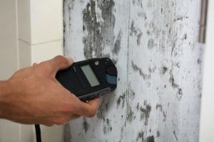10 Interesting Mold Facts! - Did you know that there are 3 distinct types of mold? This is just 1 of 10 interesting mold facts we list and explain in this article. Pay particular attention to facts 1, 3, 7, and 10!