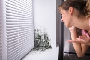 Mold Cleanup Is Not A DIY Job! - It is certainly tempting to grab an all-purpose cleaner and a roll of paper towels when you spot mold in your home or office. You must resist this temptation! Skip the DIY cleaning attempt and lean on the experts for a thorough and safe mold removal. Here's why!