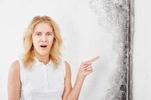 Mold Removal Consumer Guide - Have you ever wondered what professional mold removal specialists do to restore the fungal ecology of your home to a healthy state? The purpose of this article is to explain why you need to hire a professional, explaining the step by step process.