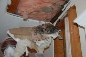 Why Does Mold Grow In Attics? - Attic mold is a common problem. This article lists and explains the top 4 reasons why mold grows in attics and how it can be prevented. If you live in Palm Springs and other surrounding areas and suspect that mold is growing in your attic, call Flood Response, (760) 343-3933!