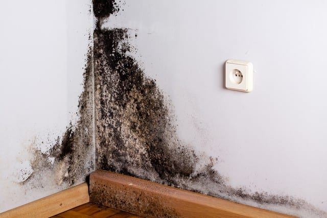 Got Water Damage or Mold Questions?