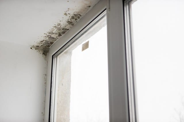 Factors That Determine Mold Removal Cost!