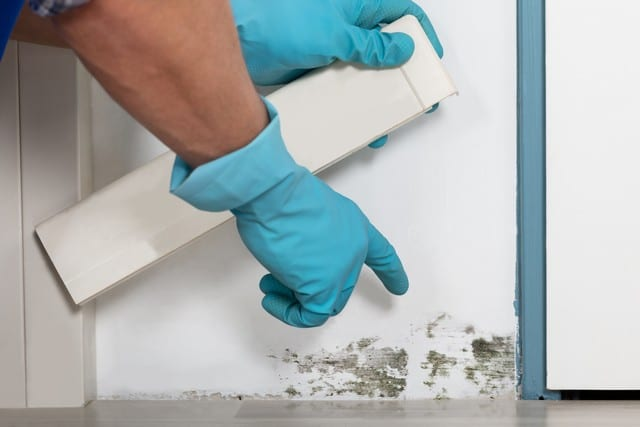 Is There Mold Hidden In Your Home