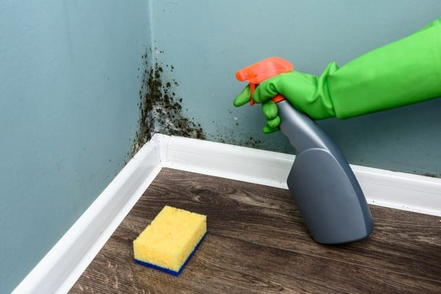Mold Cleanup Is Not A DIY Job!